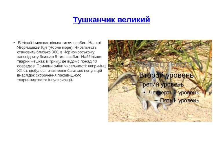 Тушканчик великий В Україні мешкає кілька тисяч особин. На п-ві Ягорлицький ...