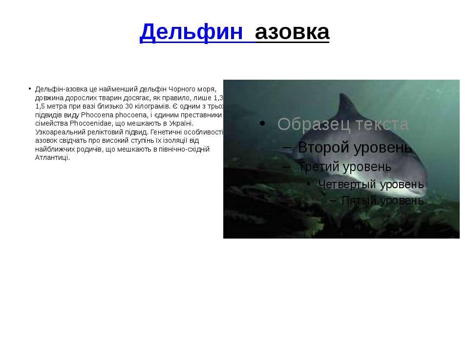Дельфиназовка Дельфін-азовка це найменший дельфін Чорного моря, довжина дор...