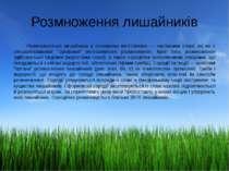 Розмноження лишайників Розмножуються лишайники в основному вегетативно — част...