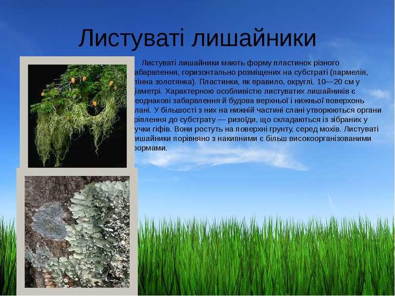 Листуваті лишайники Листуваті лишайники мають форму пластинок різного забарвл...
