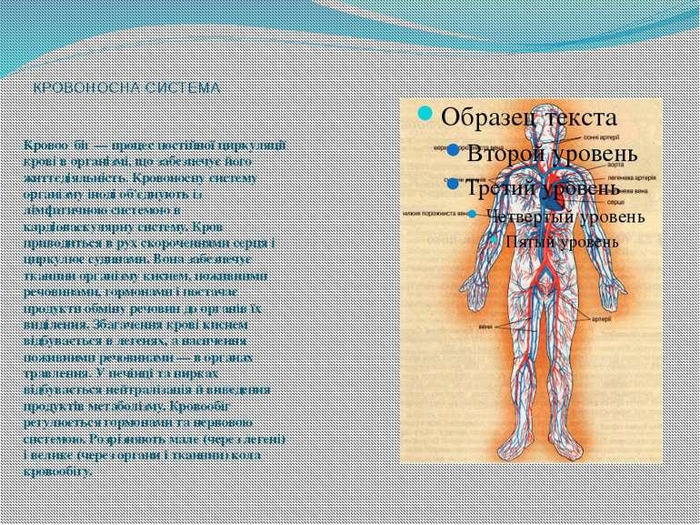 КРОВОНОСНА СИСТЕМА Кровоо біг — процес постійної циркуляції крові в організмі...