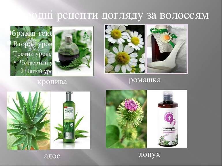 Народні рецепти догляду за волоссям кропива ромашка алое лопух