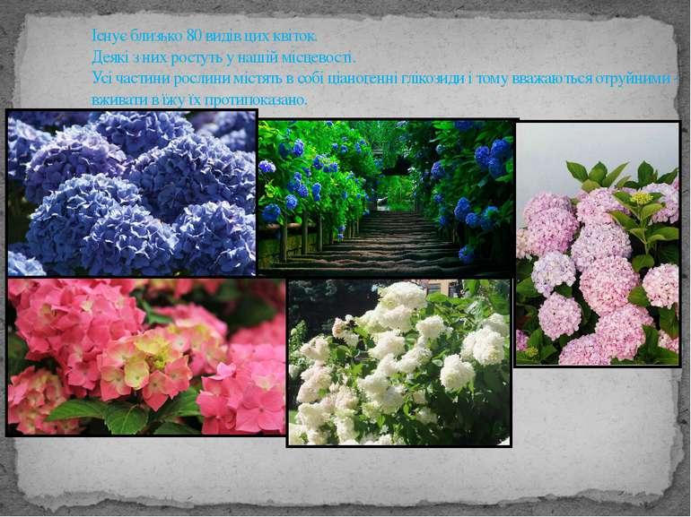 Існує близько 80 видів цих квіток. Деякі з них ростуть у нашій місцевості. Ус...