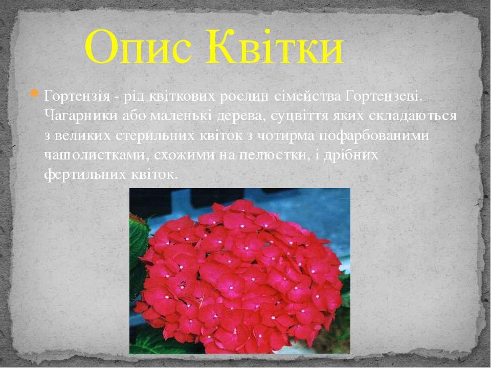Гортензія - рід квіткових рослин сімейства Гортензеві. Чагарники або маленькі...