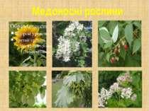 Медоносні рослини