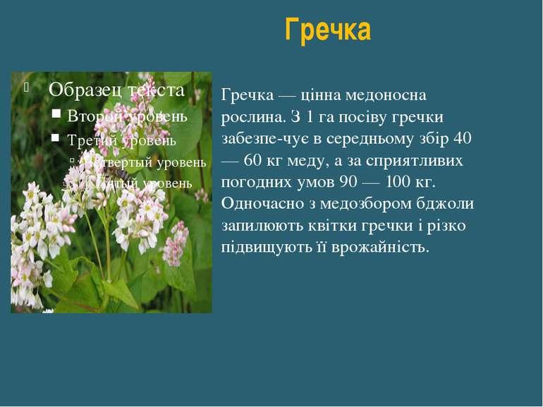 Гречка Гречка — цінна медоносна рослина. З 1 га посіву гречки забезпе чує в с...