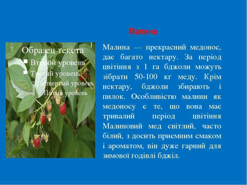 Малина Малина — прекрасний медонос, дає багато нектару. За період цвітіння з ...