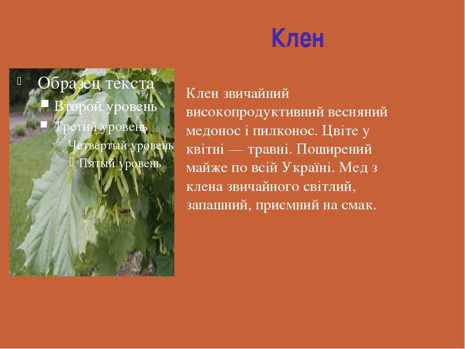 Клен Клен звичайний високопродуктивний весняний медонос і пилконос. Цвіте у к...