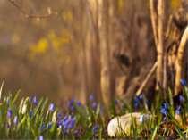 Спишіть текст: Піднялася з чорної землі та забуяла молода зелена травка. З'яв...