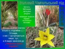 Містить 368 видів квіткових рослин Найвищий показник видової насиченості квіт...