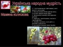 1. У лузі калинонька з квіточками, наче матуся з діточками. 2. Весною калина ...