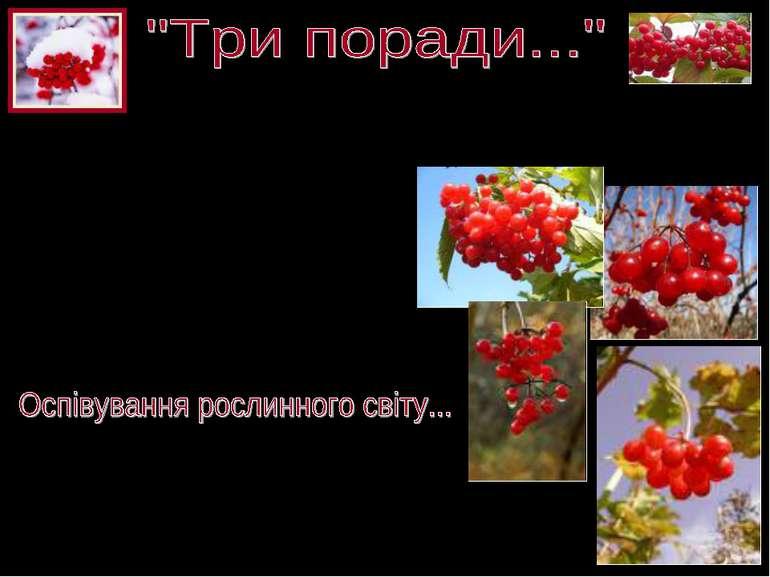 - «не рубай тополю край дороги, може, та тополя – твоя доля, твоя доля світла...
