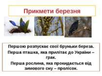 Прикмети березня Першою розпускає свої бруньки береза. Перша пташка, яка прил...