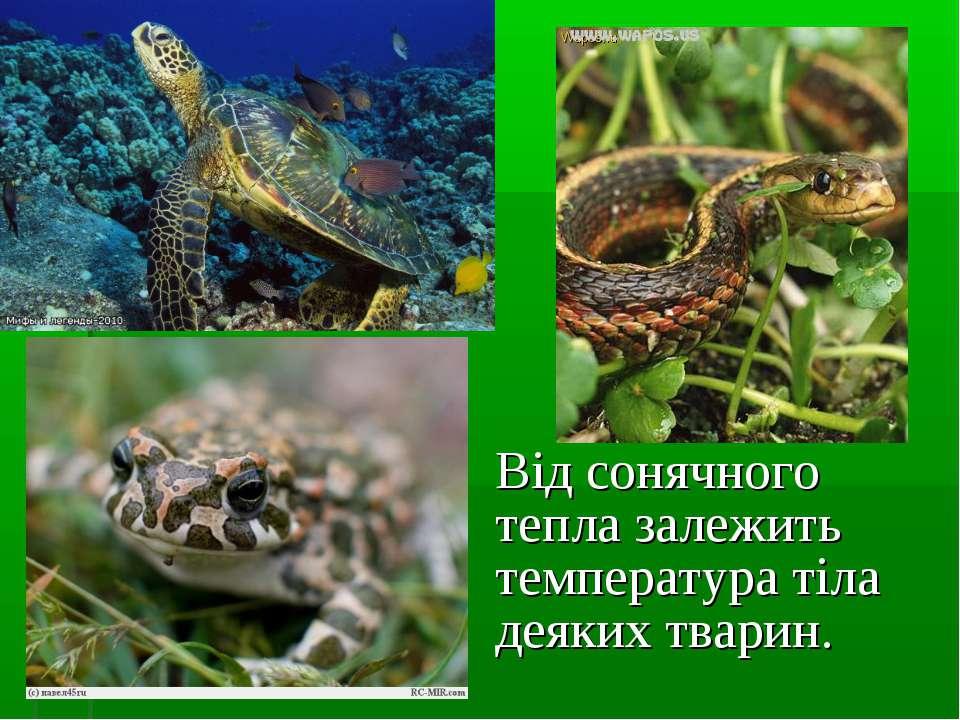 Від сонячного тепла залежить температура тіла деяких тварин.