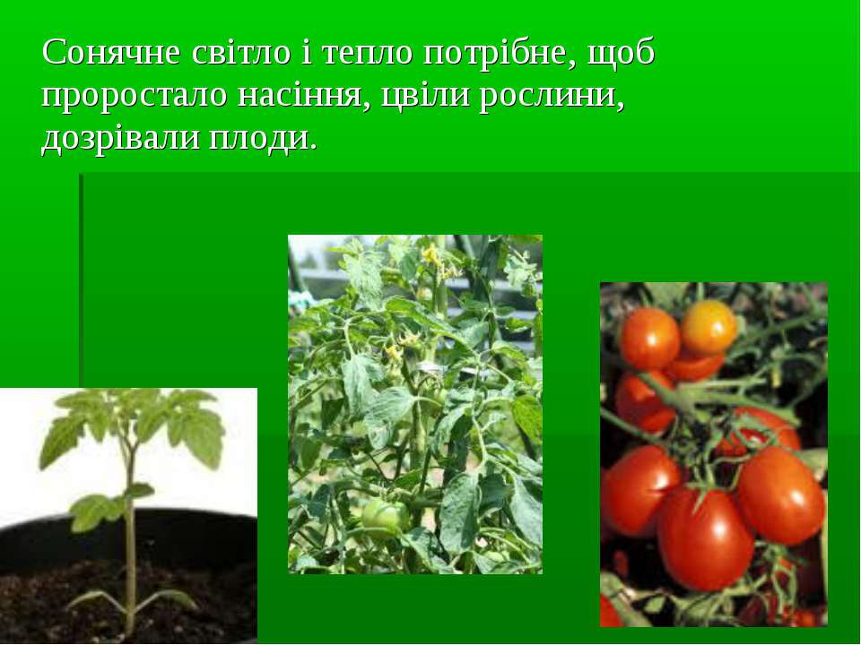 Сонячне світло і тепло потрібне, щоб проростало насіння, цвіли рослини, дозрі...