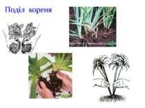 Поділ кореня