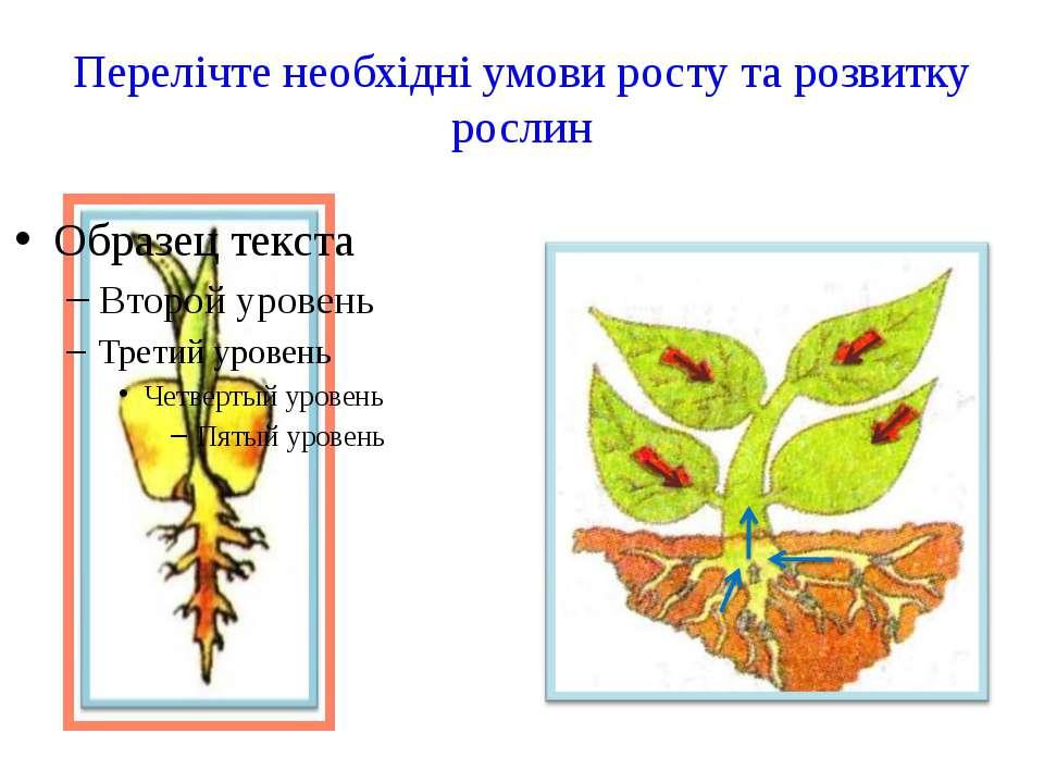 Перелічте необхідні умови росту та розвитку рослин