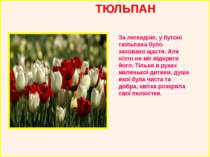 ТЮЛЬПАН За легендою, у бутоні тюльпана було заховано щастя. Але ніхто не міг ...