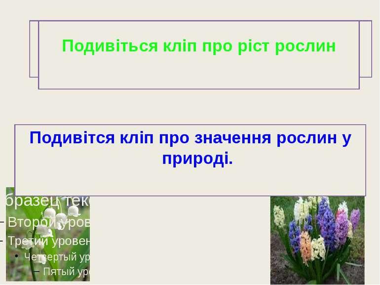 -Чи швидко рослини ростуть? -Що необхідно рослинам для росту? -Навіщо квіти ц...