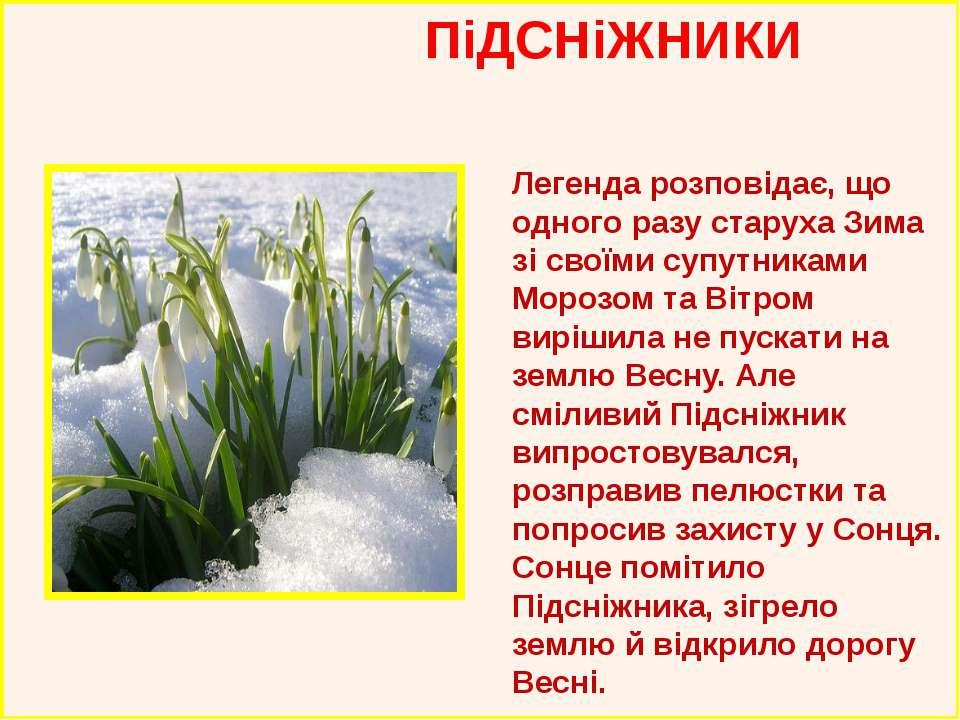 ПіДСНіЖНИКИ Легенда розповідає, що одного разу старуха Зима зі своїми супутни...