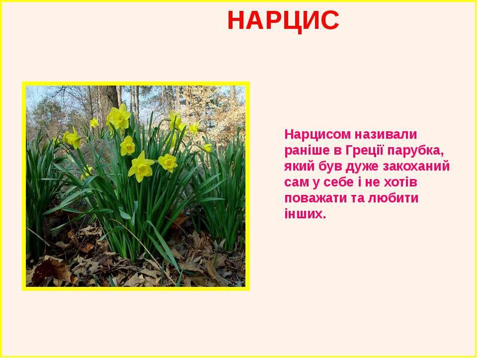 НАРЦИС Нарцисом називали раніше в Греції парубка, який був дуже закоханий сам...