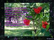 Люблю я в рідному краю Пропахлі вітром колоски — Таке чіпке безмежне поле, І ...