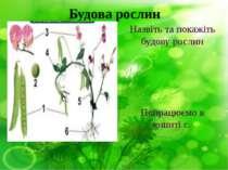 Будова рослин Назвіть та покажіть будову рослин Попрацюємо в зошиті с.