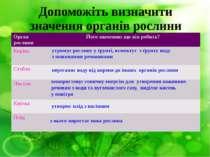Допоможіть визначити значення органів рослини утримує рослину у ґрунті, всмок...