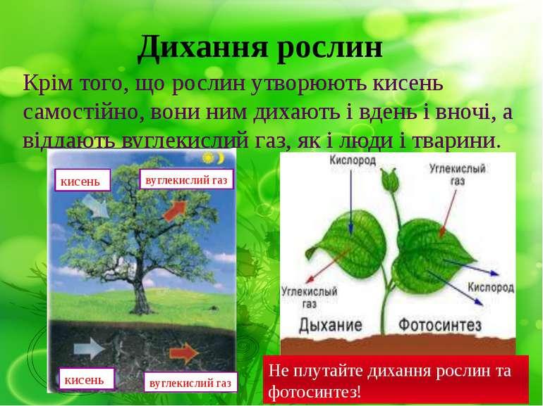 Дихання рослин Крім того, що рослин утворюють кисень самостійно, вони ним дих...