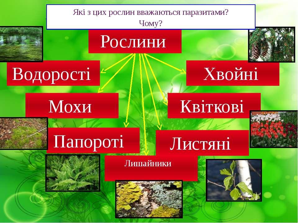 Хвойні Які розділи рослин ви запам'ятали? Квіткові Мохи Папороті Водорості Ро...