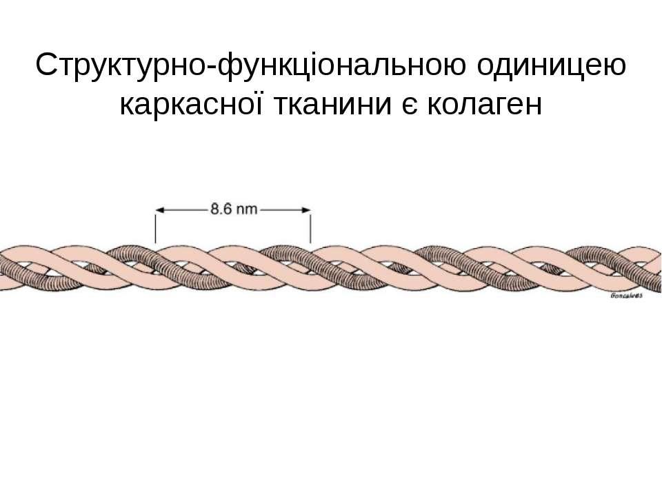 Структурно-функціональною одиницею каркасної тканини є колаген