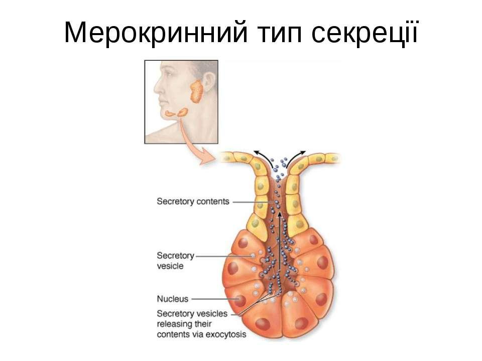 Мерокринний тип секреції