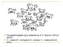 Походний порядок гурту павіанів (за Ф. Р. Фуенте, 1972) в дорозі С – самки; М...