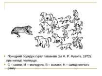 Походний порядок гурту павіанівв (за Ф. Р. Фуенте, 1972): при нападі леопарда...