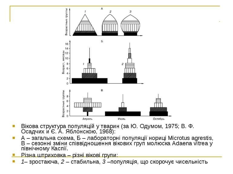 Вікова структура популяцій у тварин (за Ю. Одумом, 1975; В. Ф. Осадчих и Є. А...