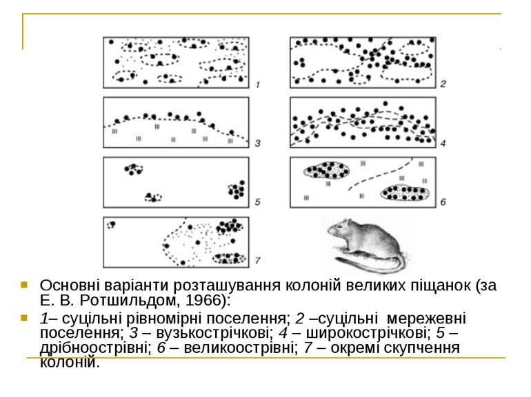 Основні варіанти розташування колоній великих піщанок (за Е. В. Ротшильдом, 1...