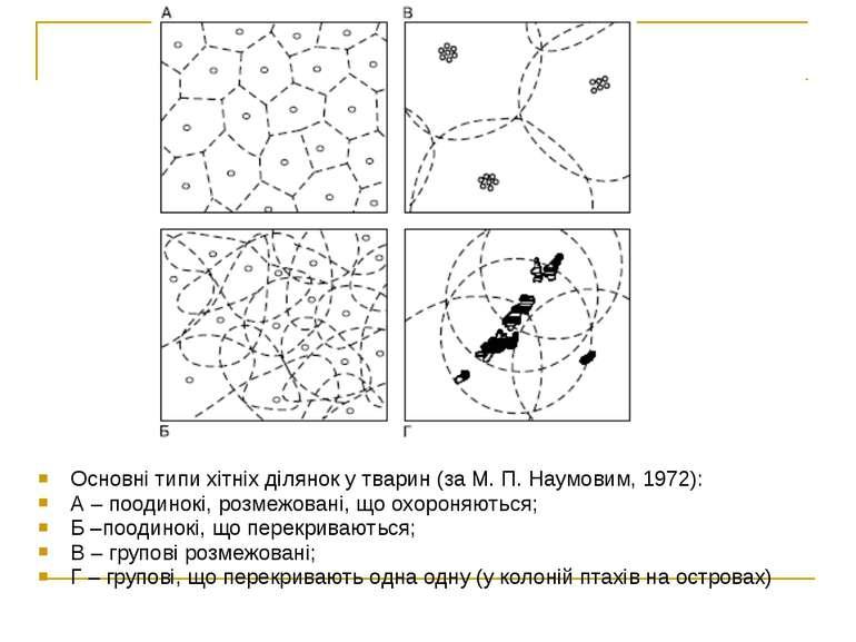 Основні типи хітніх ділянок у тварин (за М. П. Наумовим, 1972): А – поодинокі...