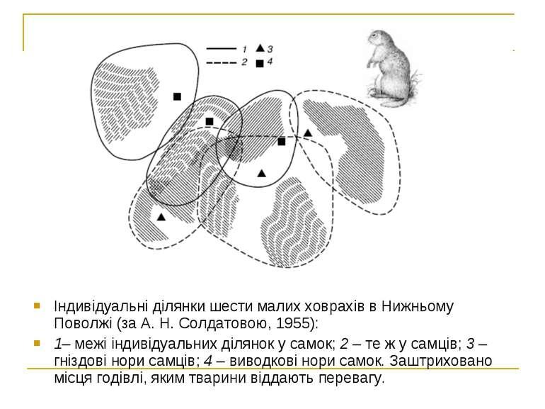 Індивідуальні ділянки шести малих ховрахів в Нижньому Поволжі (за А. Н. Солда...