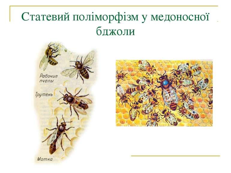 Статевий поліморфізм у медоносної бджоли