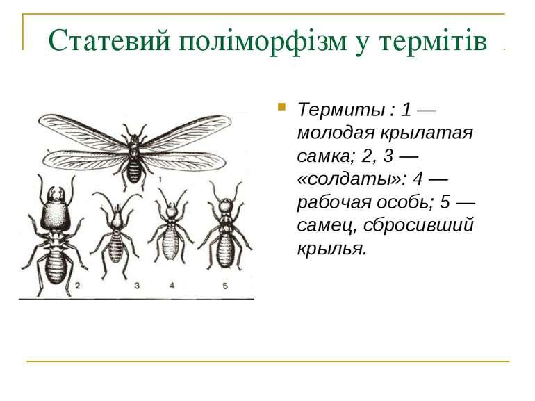 Статевий поліморфізм у термітів Термиты : 1 — молодая крылатая самка; 2, 3 — ...