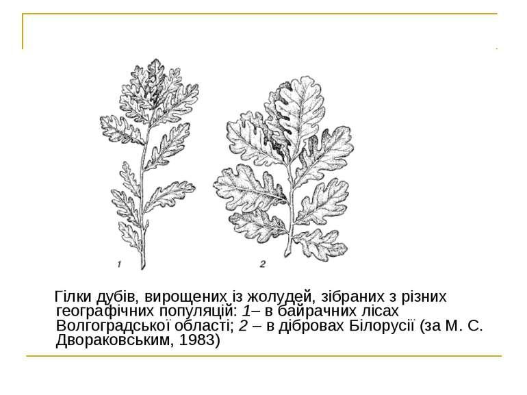 Гілки дубів, вирощених із жолудей, зібраних з різних географічних популяцій: ...