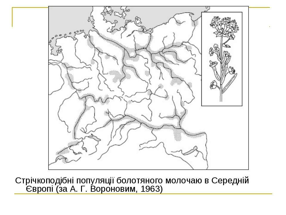 Cтрічкоподібні популяції болотяного молочаю в Середній Європі (за А. Г. Ворон...