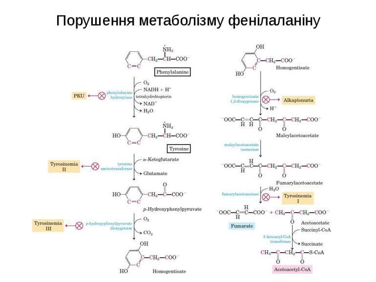 Порушення метаболізму фенілаланіну
