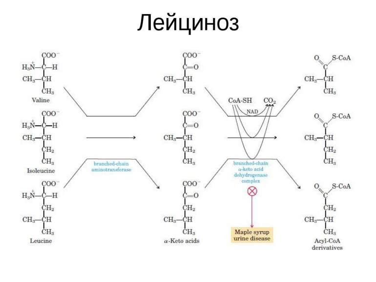 Лейциноз