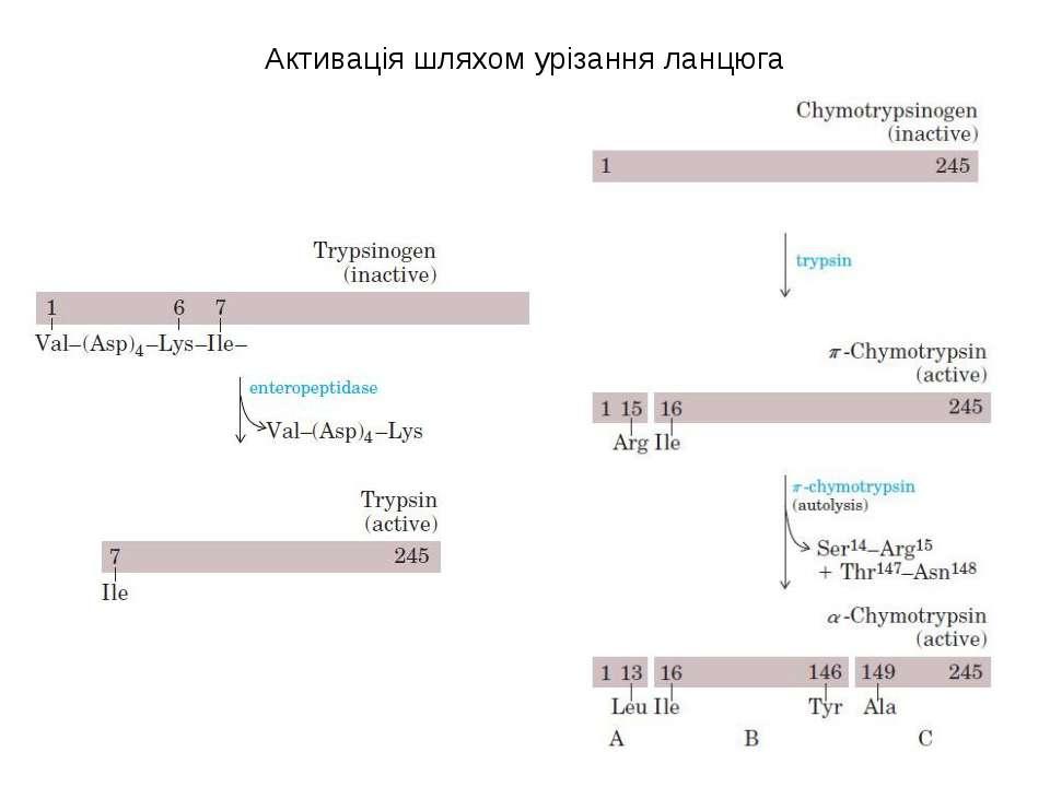 Активація шляхом урізання ланцюга