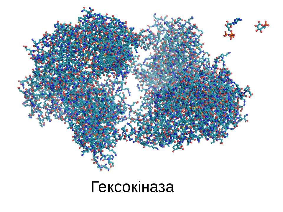 Гексокіназа