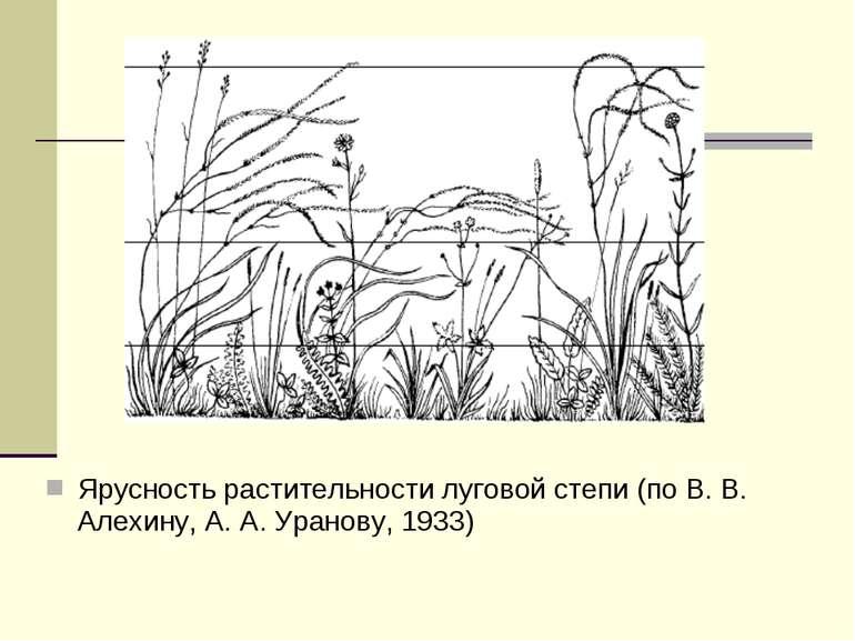 Ярусность растительности луговой степи (по В. В. Алехину, А. А. Уранову, 1933)