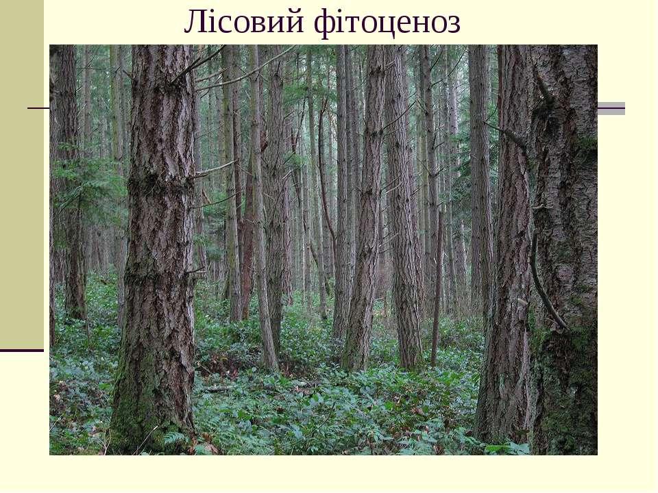 Лісовий фітоценоз
