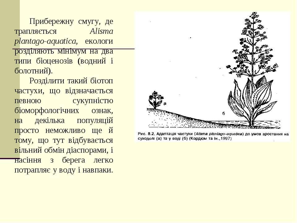 Прибережну смугу, де трапляється Alisma plantago-aquatica, екологи розділяють...