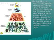 Зниження біомаси при переході з одного харчового рівня на інший обумовлене ти...